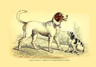 ALPINE, OR GREAT ST. BERNARD DOG & KING CHARLES'S SPANIEL
